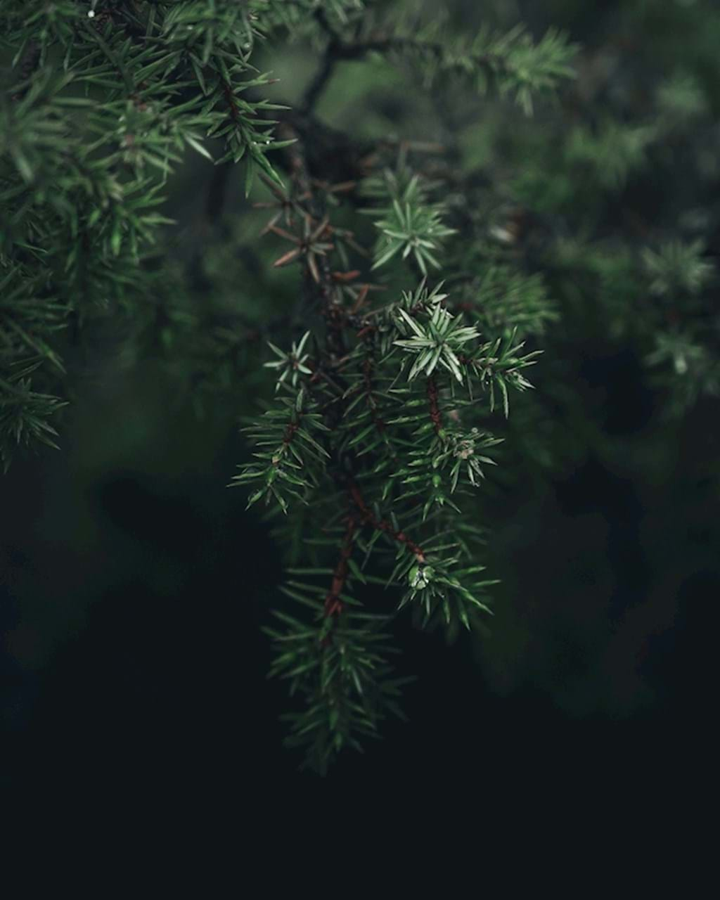 Poster: Moody Green Twig - Artistic