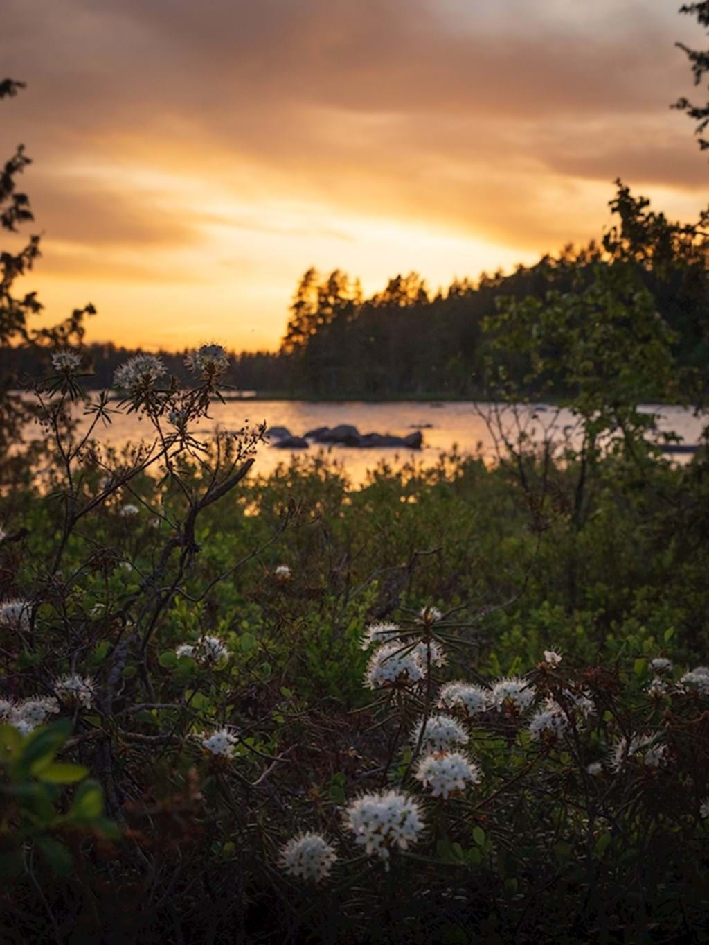 Poster: A traditional Swedish sunset - Nature