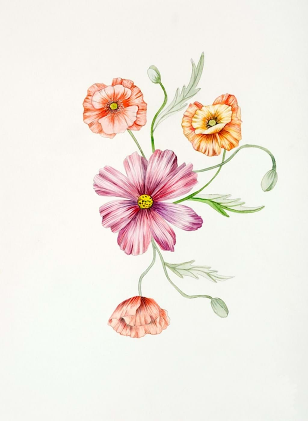 Poster: PAPAVER AND COSMEA - Artistic