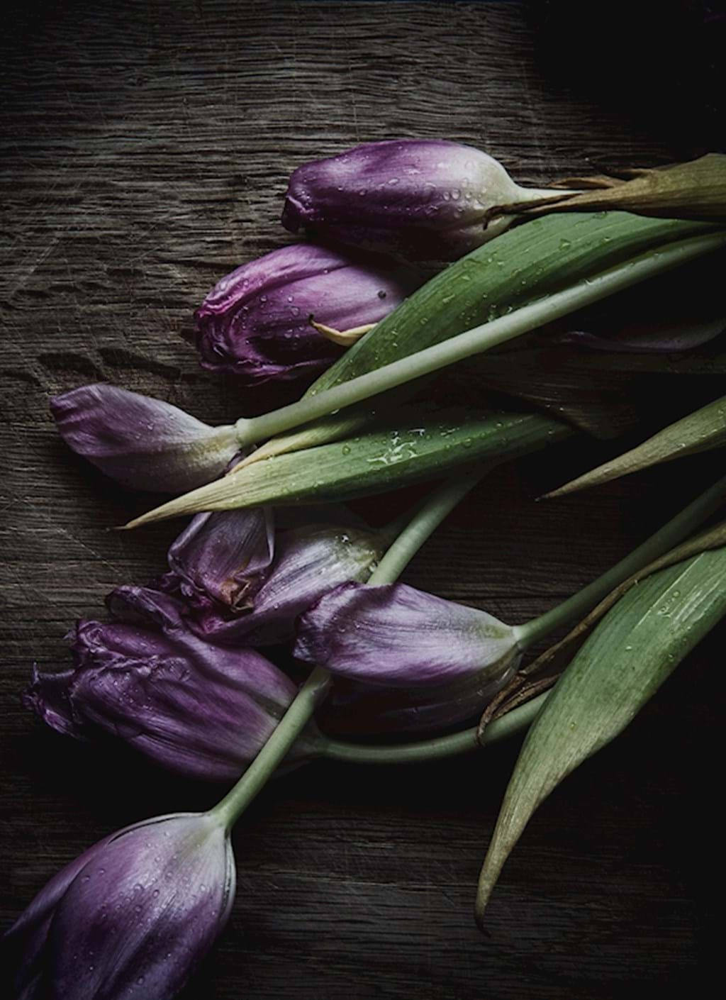 Poster: Lilac tulips - Digital