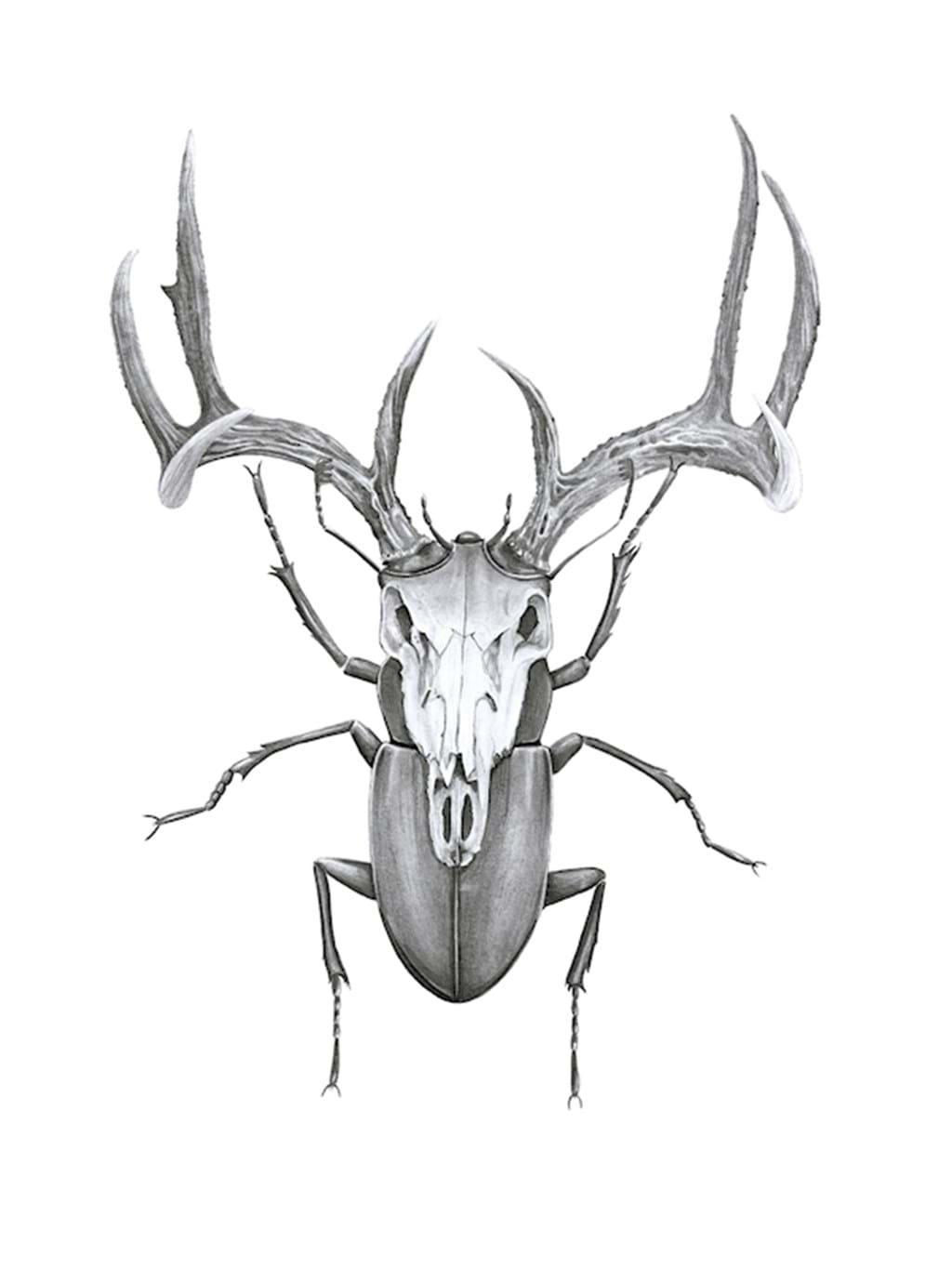 Poster: Mr Stag Bettle - Animal & Insects