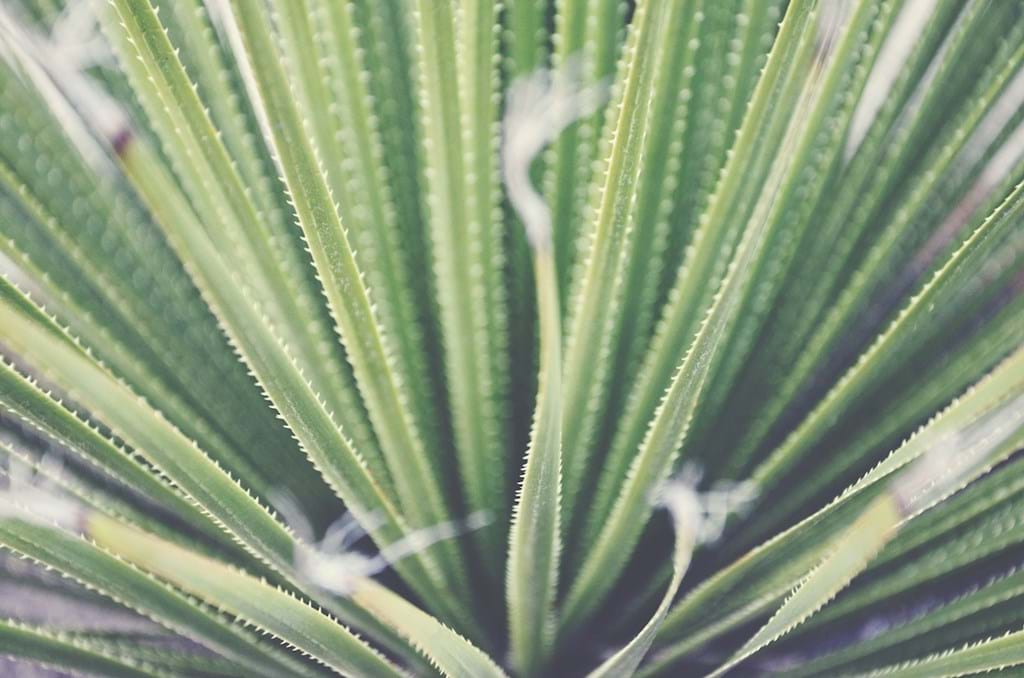 Poster: Green fingers - Abstract