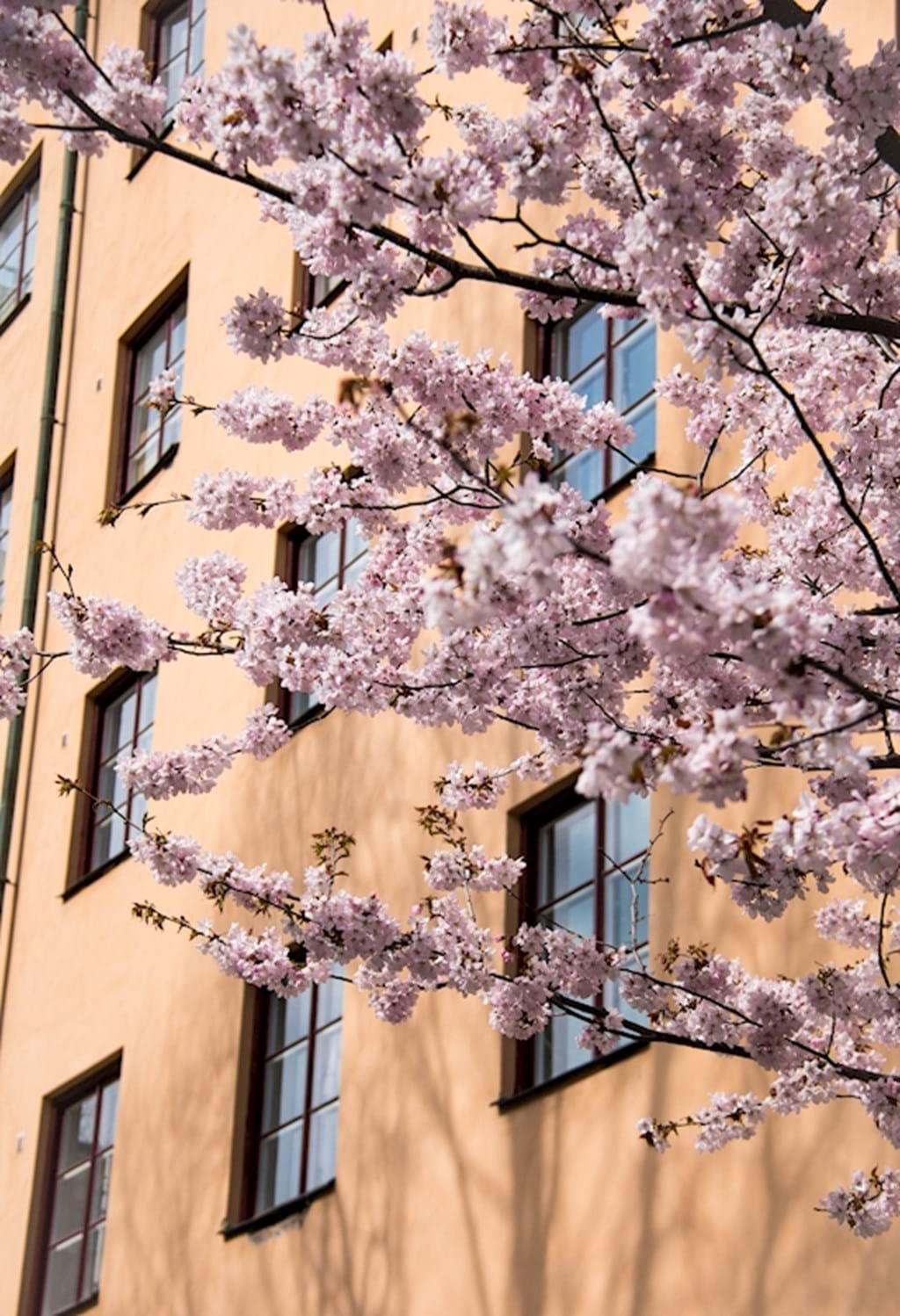 Poster: Spring in Stockholm - Places & Cities