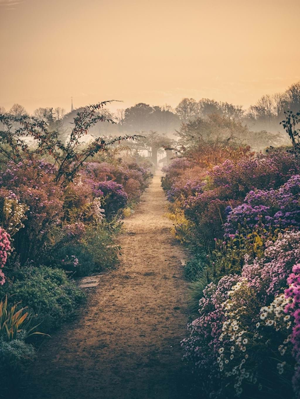 Poster: Through the fog & the flowers - Nature