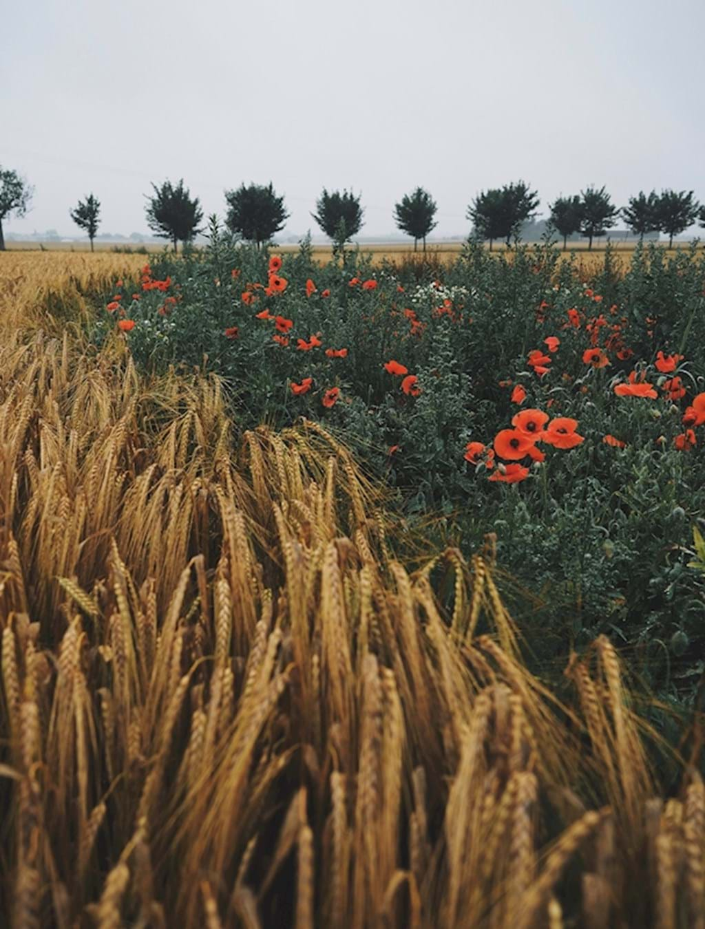 Poster: Harvest time - Kitchen Art