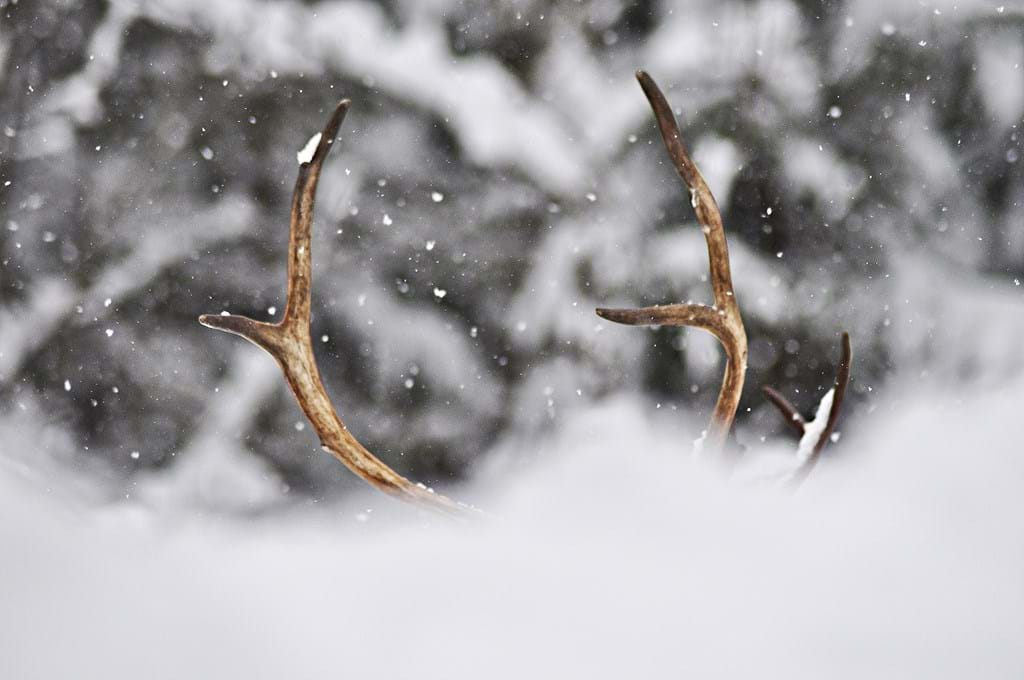 Poster: Reindeer - For those who seek an artistic winter print for the living room, the bedroo...