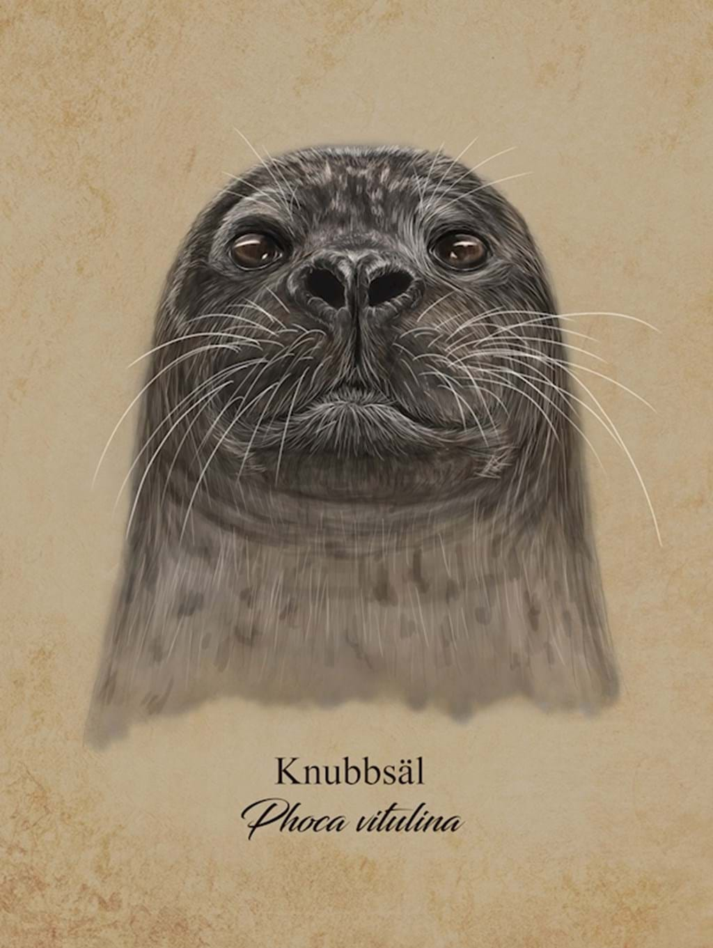 Poster: Seal - Digital Art