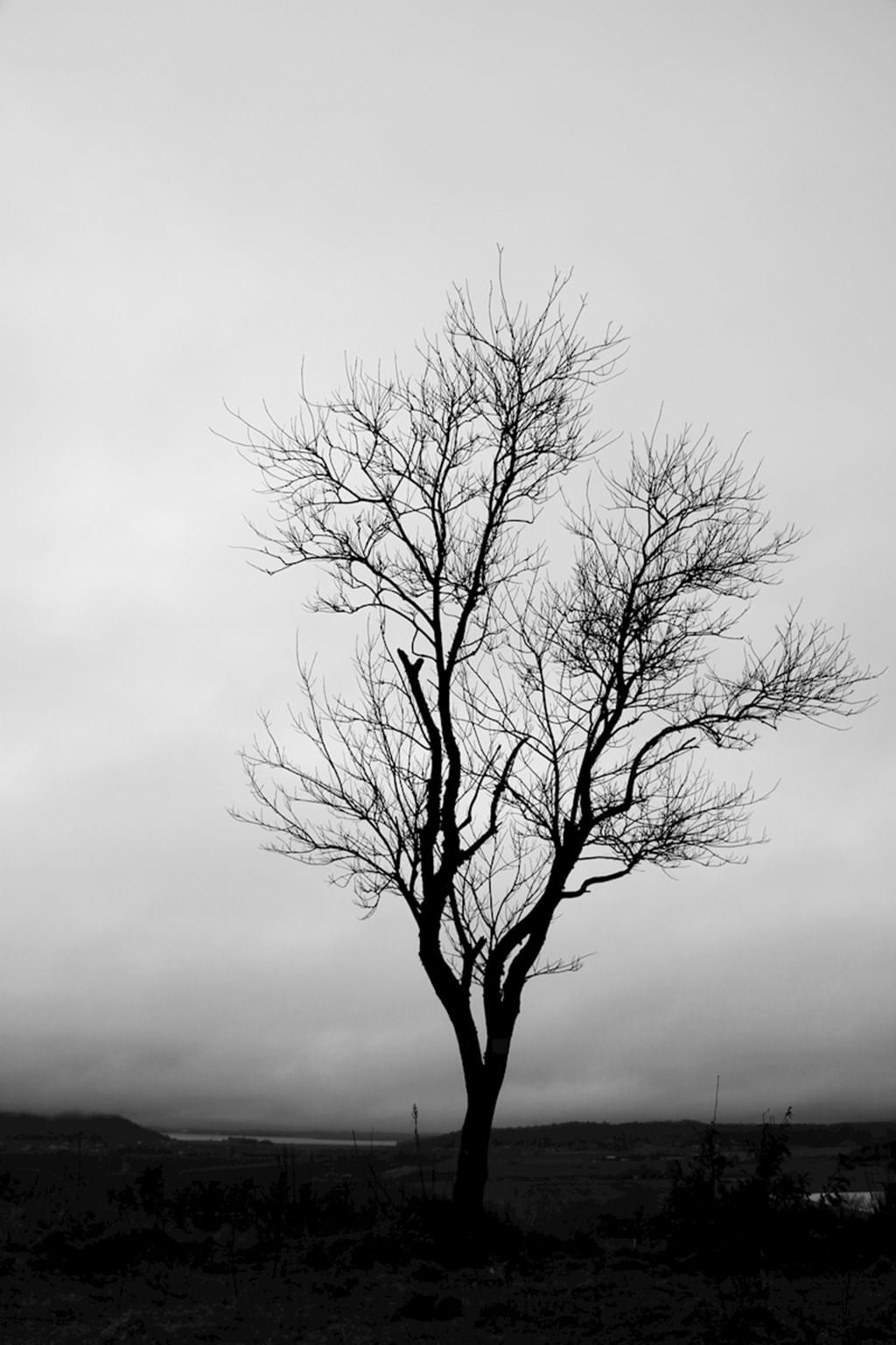 Poster: Lone tree - Nature