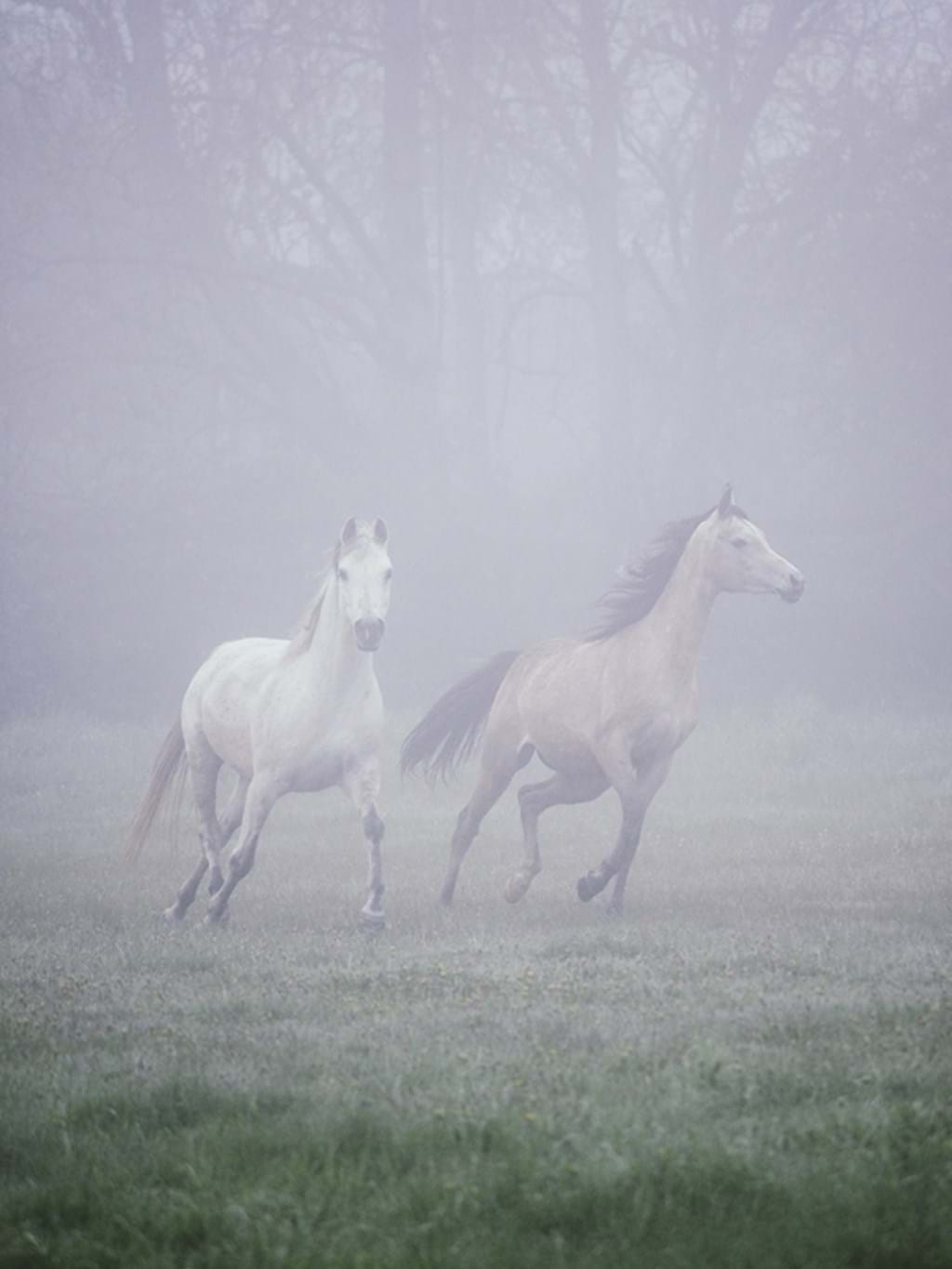 Poster: Runaway Horses - Animal & Insects