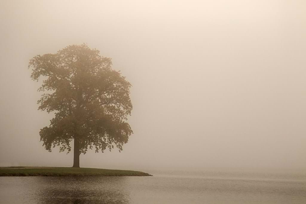 Poster: Lonely Tree - Nature