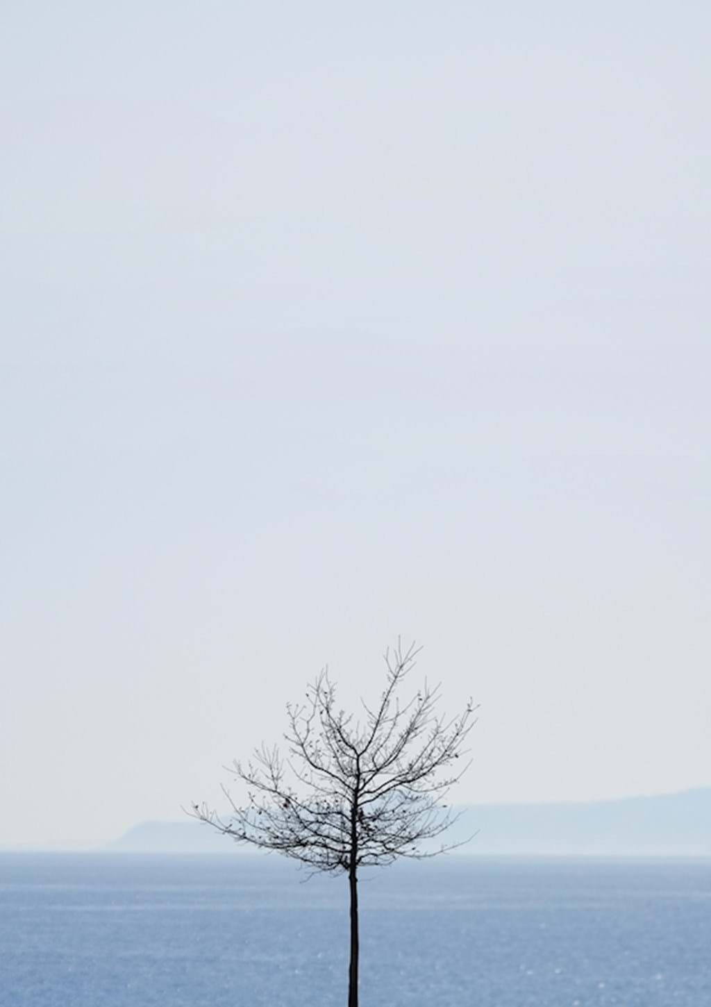 Poster: Tree by the ocean - Nature