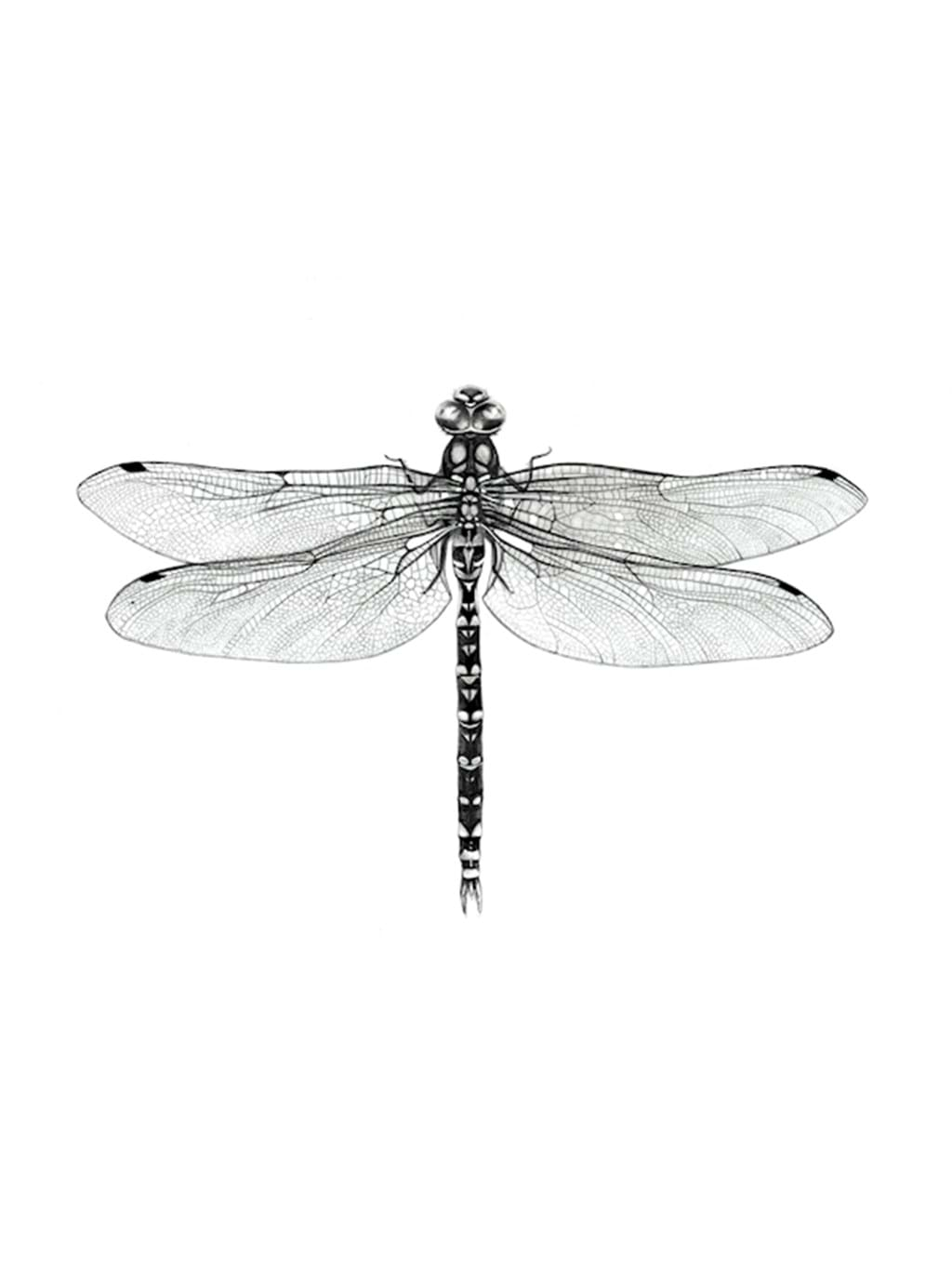 Poster: Dragonfly - Kids Posters