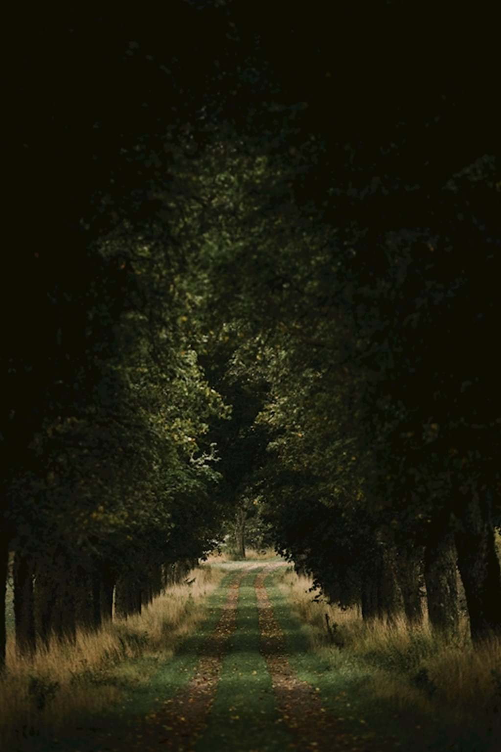 Poster: Down The Road - Nature