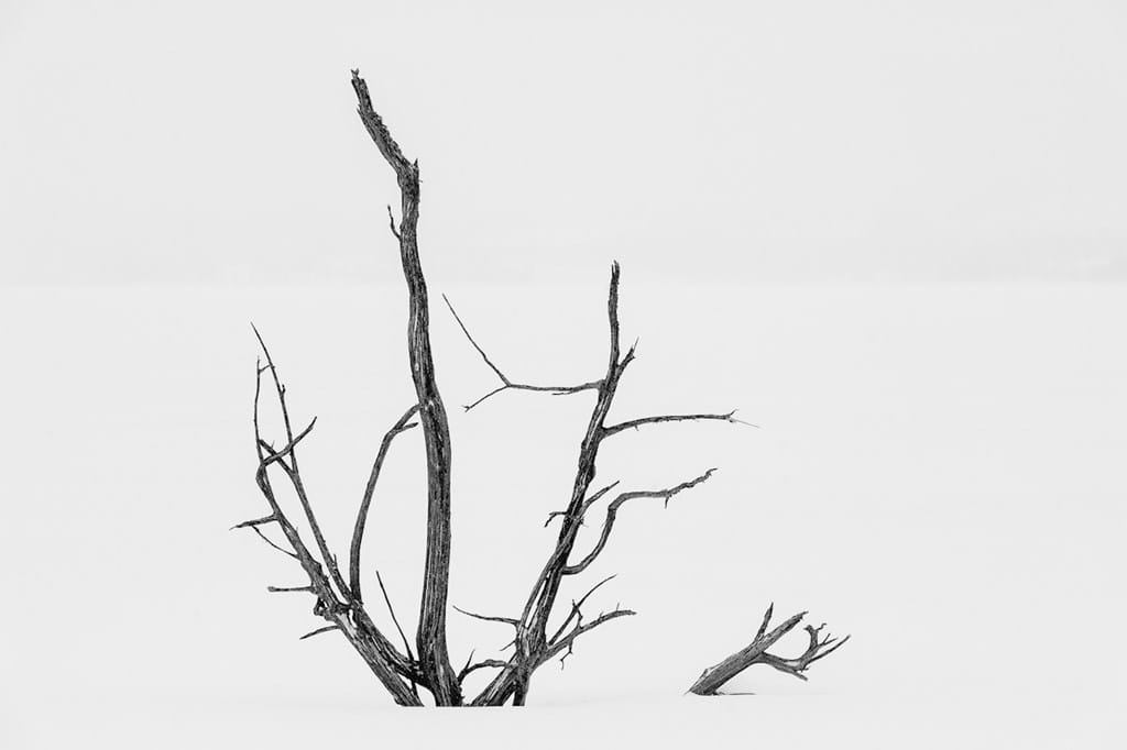 Poster: Roots sticking up - Black & White