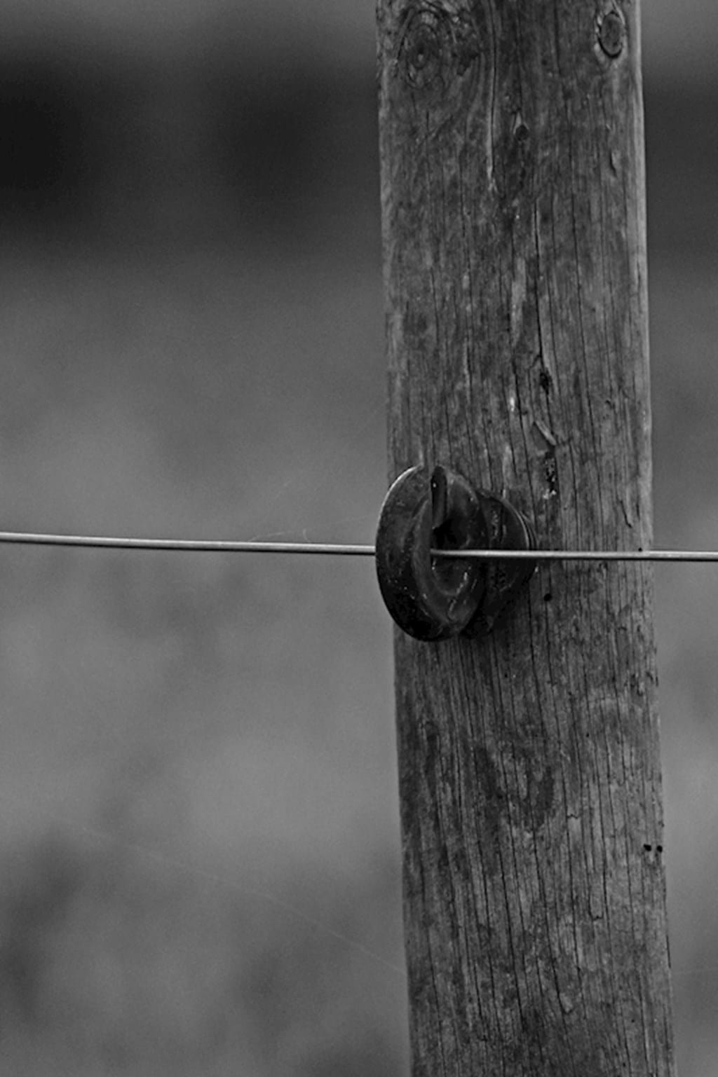 Poster: Wire on pole - Digital