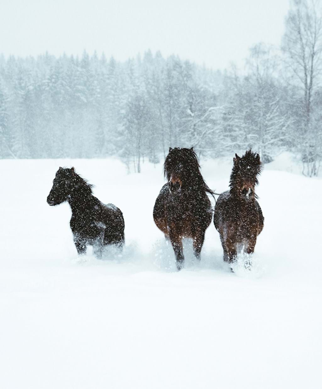 Poster: Winter horses - Digital