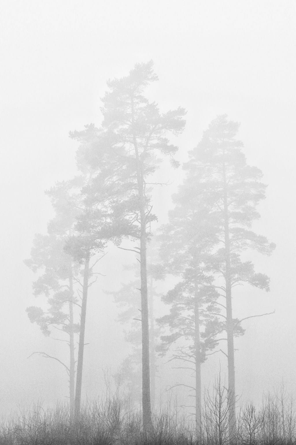 Poster: scetched by fog - Botanical
