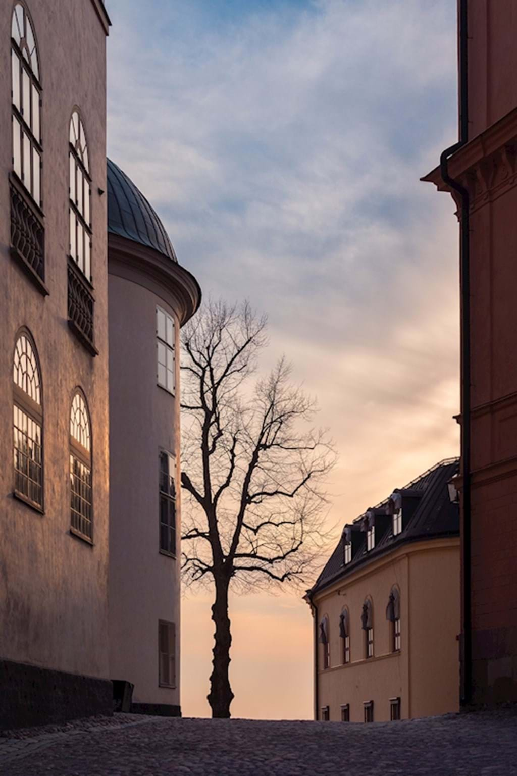 Poster: Sunset and tree i old town - Digital
