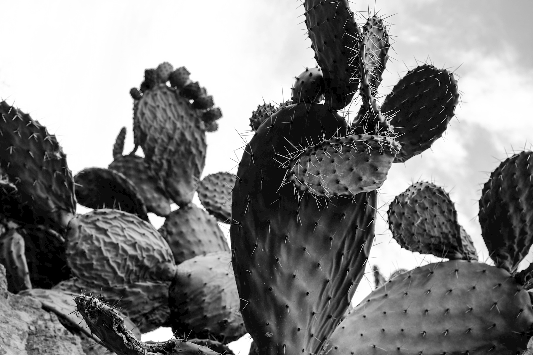 Cactus posters & prints by Johanna Ehrenborg Staffas