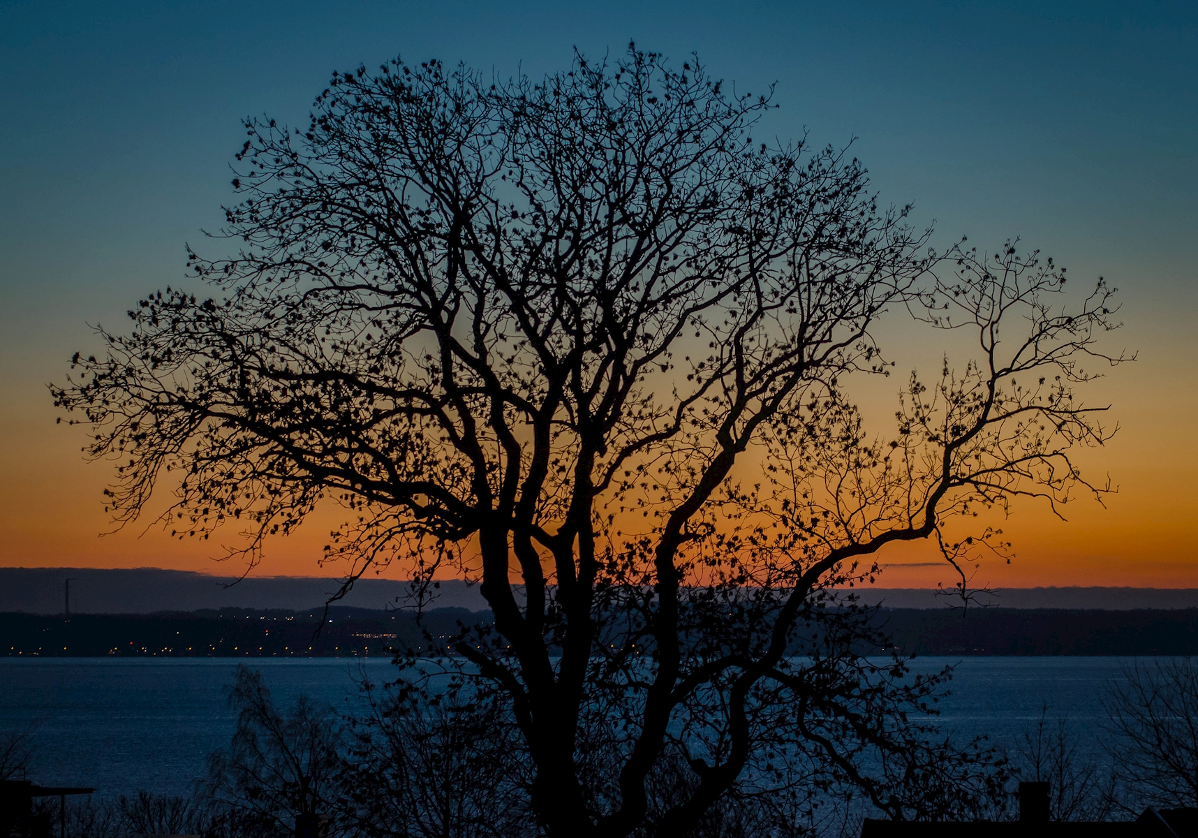 Tree at sunset posters & prints by Frank Hellsten