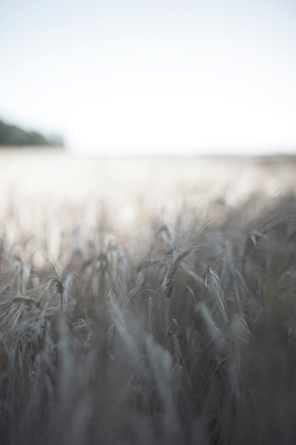 fields of a song
