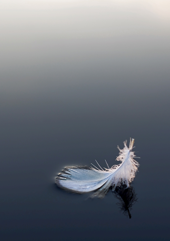 Light as a Feather posters & prints by Monica Asp