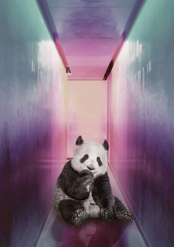 Panda in the corridor posters & prints by JENNI TERVAHAUTA