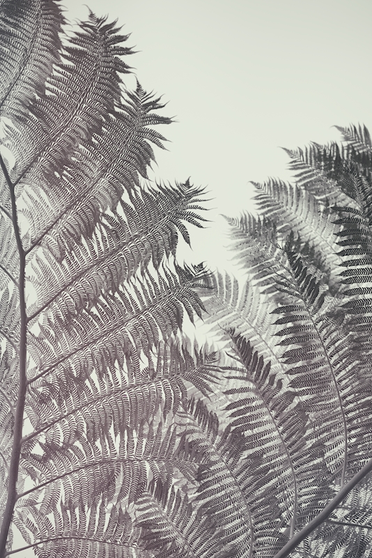 Fern posters & prints by Pascal Deckarm