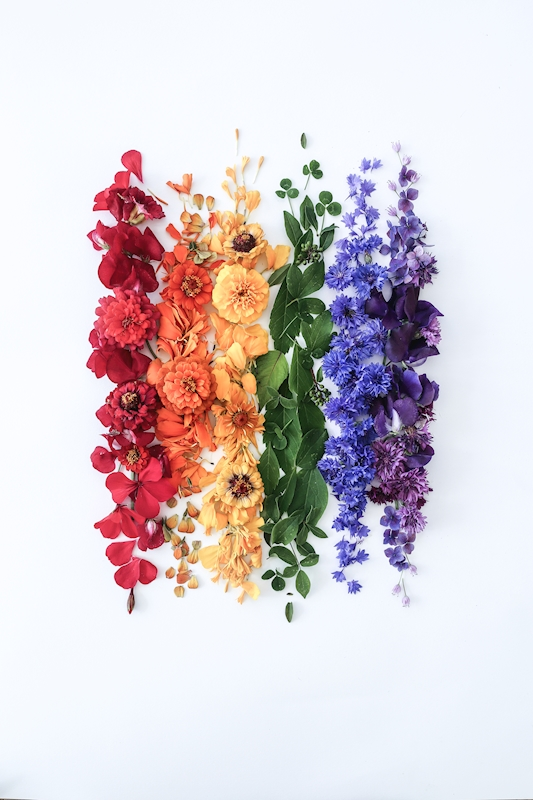Flower Rainbow posters & prints by Hanna Wendelbo