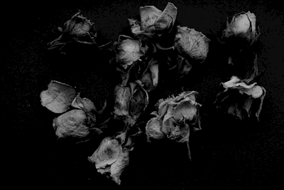 all the roses I given myself