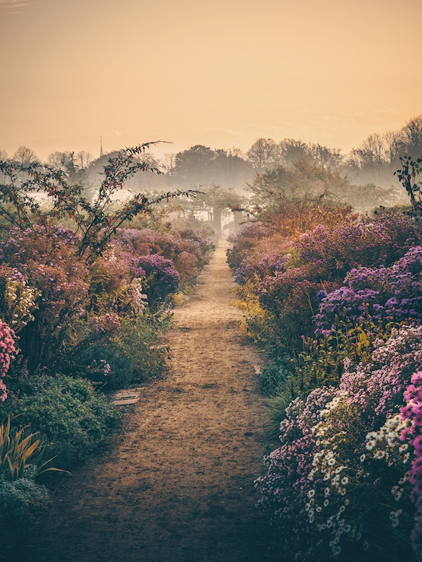Through the fog & the flowers posters & prints by Karl Andersson