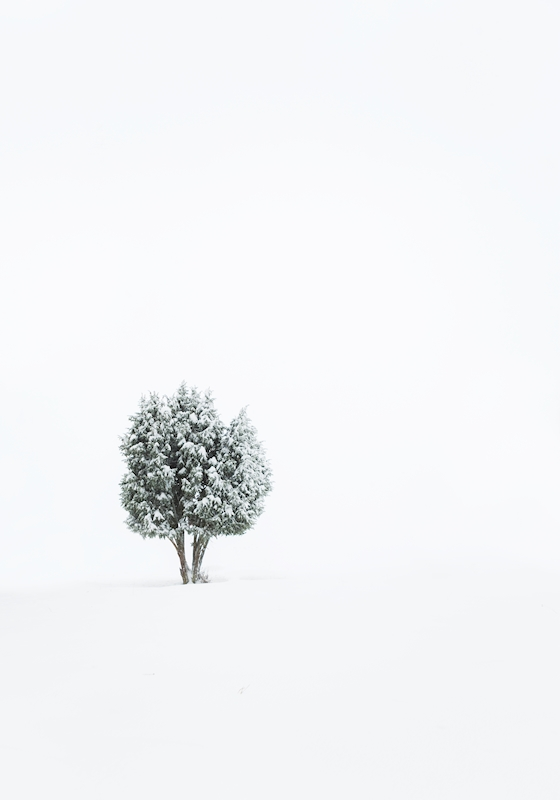 Lonely Tree posters & prints by Calle Artmark