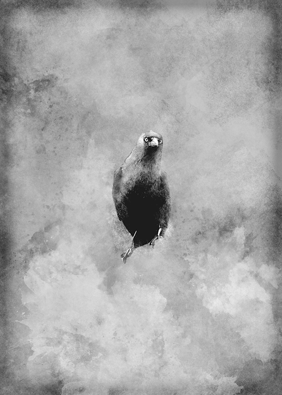 The Crow posters & prints by Linda Ohlson