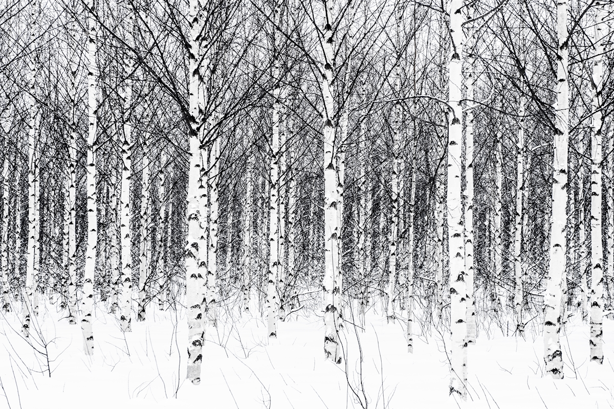 Winter in the no forest posters & prints by Béatrice Karjalainen