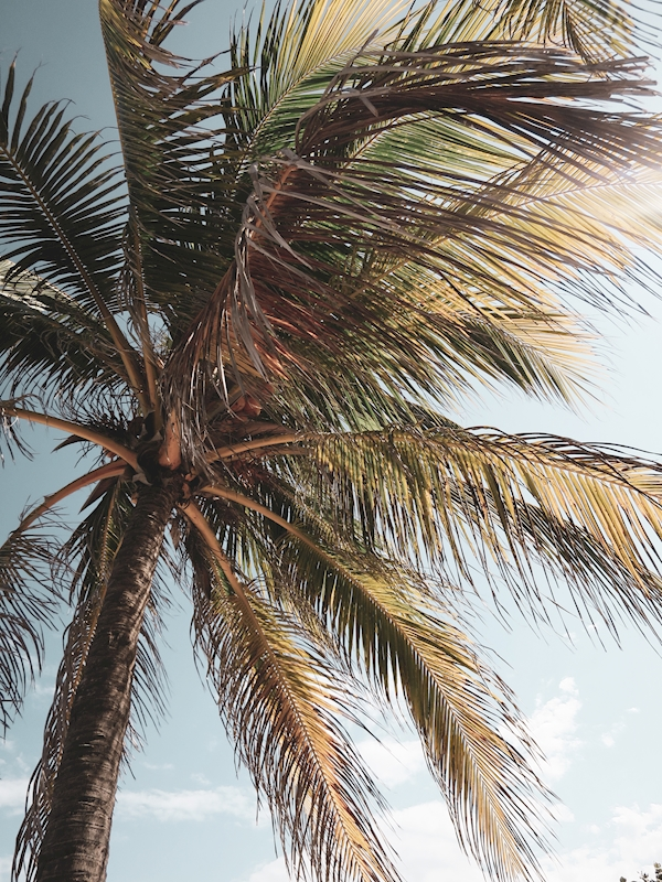 Palm posters & prints by Marika Ottosson