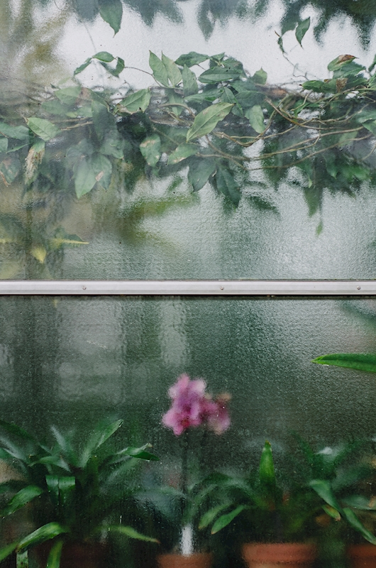 Orchid Window Poster von Azucena Morales