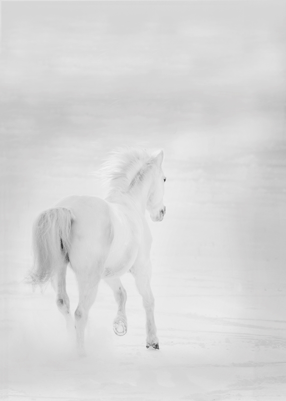 Unicorn posters & prints by Linda Ohlson