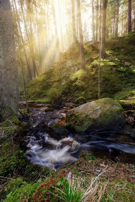 Sunshine in the forest posters & prints by Mathias Kilman