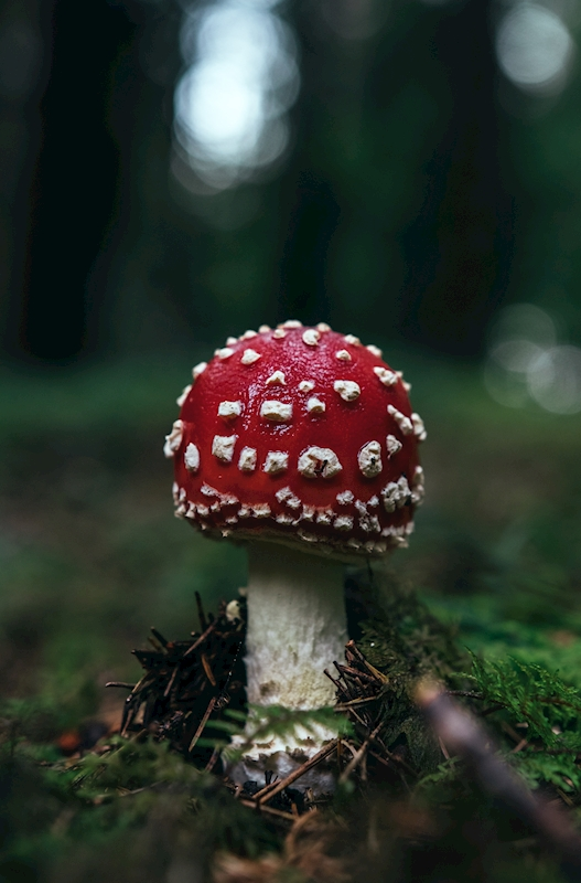 toadstool. posters & prints by Felix Lohberger