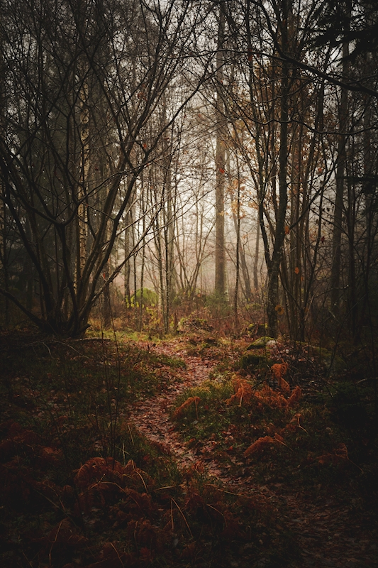 Misty Forest posters & prints by Tudor Catalin Gheorghe