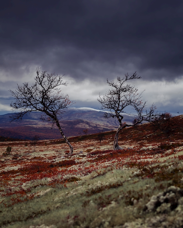 Rondane posters & prints by Andreas Lindahl