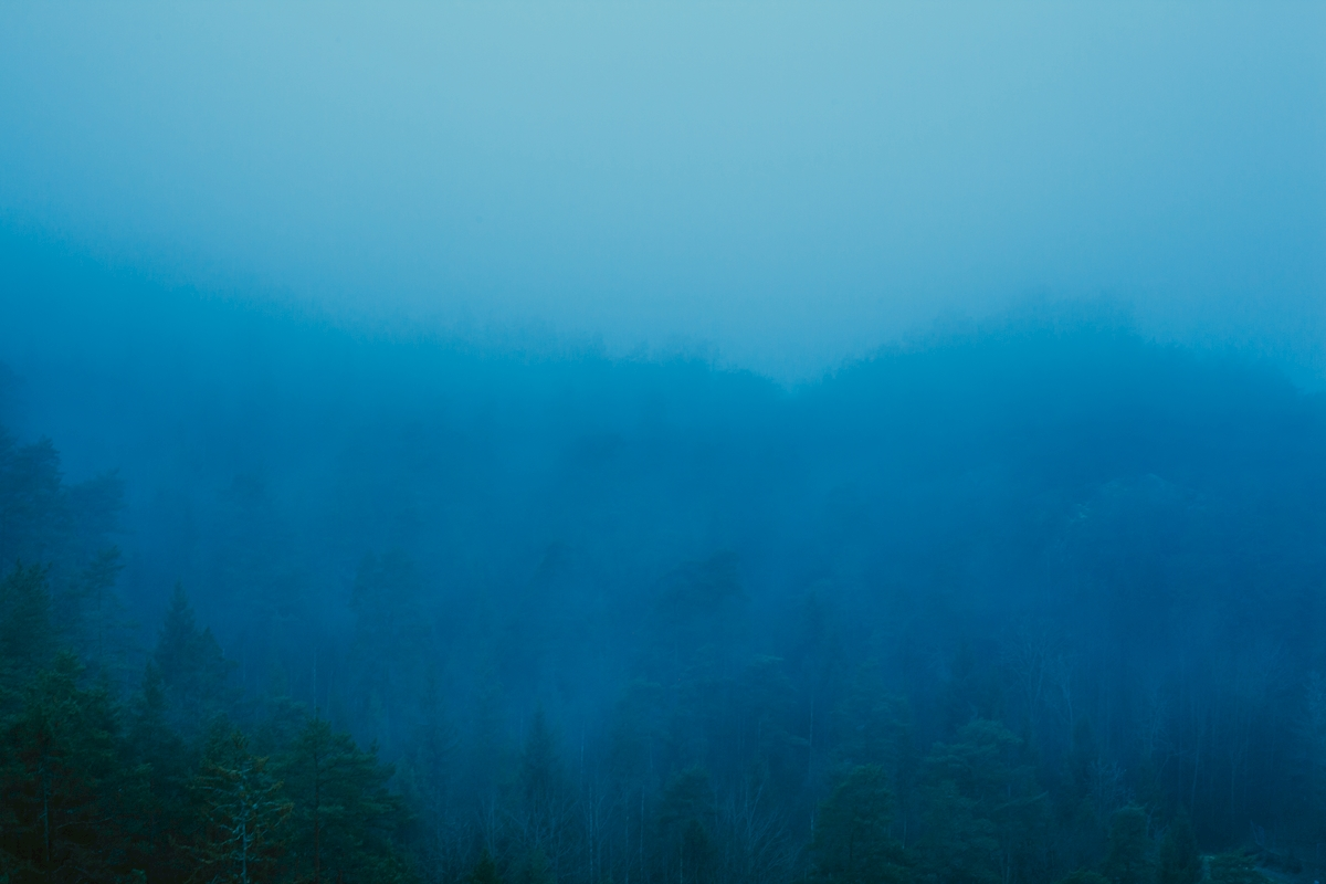 Forest and fog posters & prints by Krister Rafn