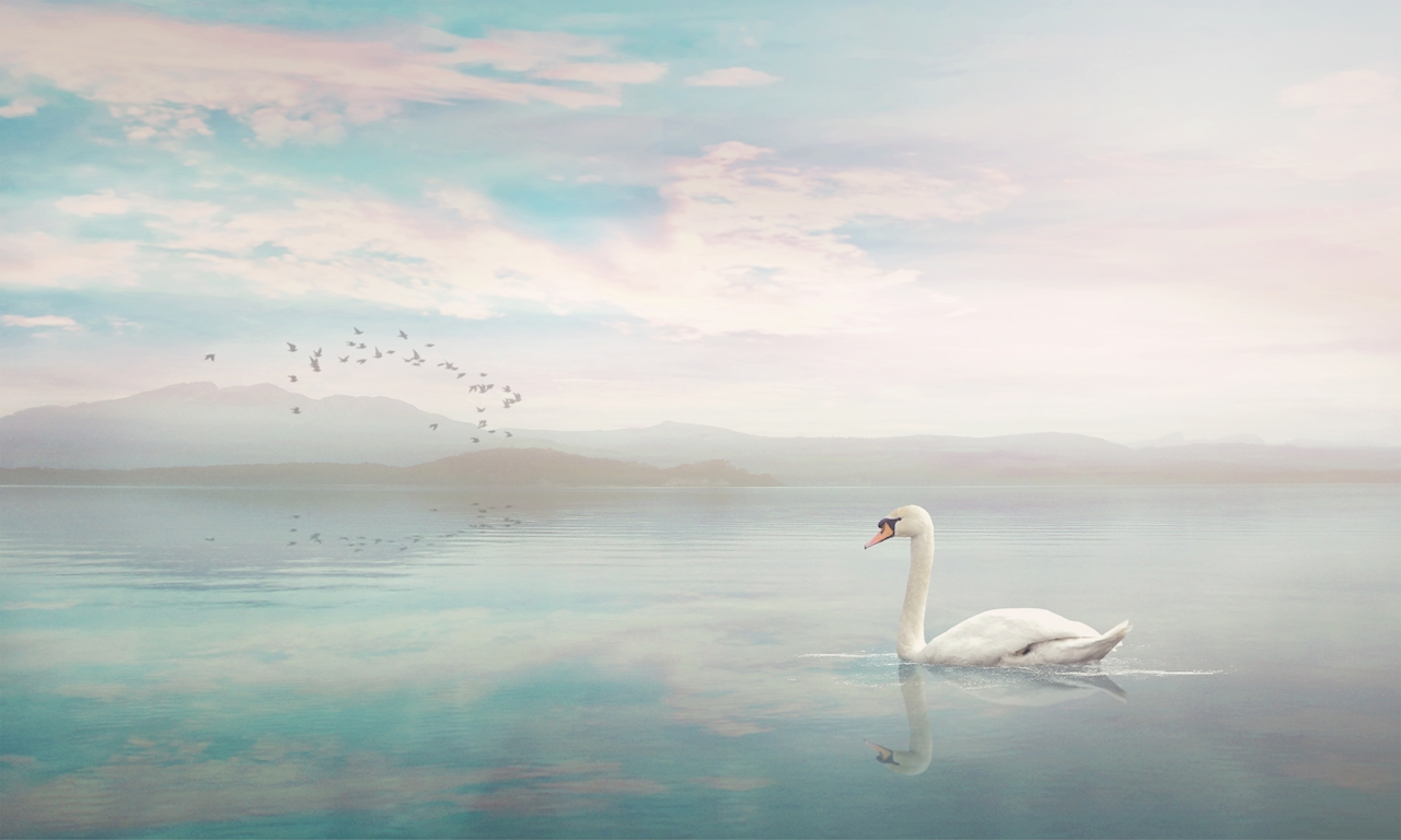 The Swan posters & prints by JENNI TERVAHAUTA