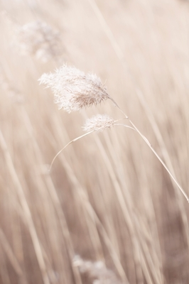 Pampas in nature 3