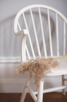 Pampas on chair 1