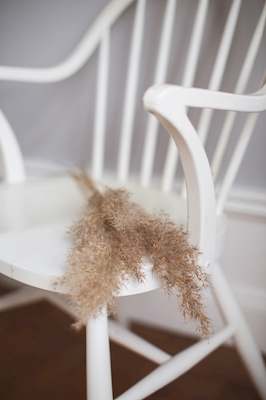 Pampas on chair 2