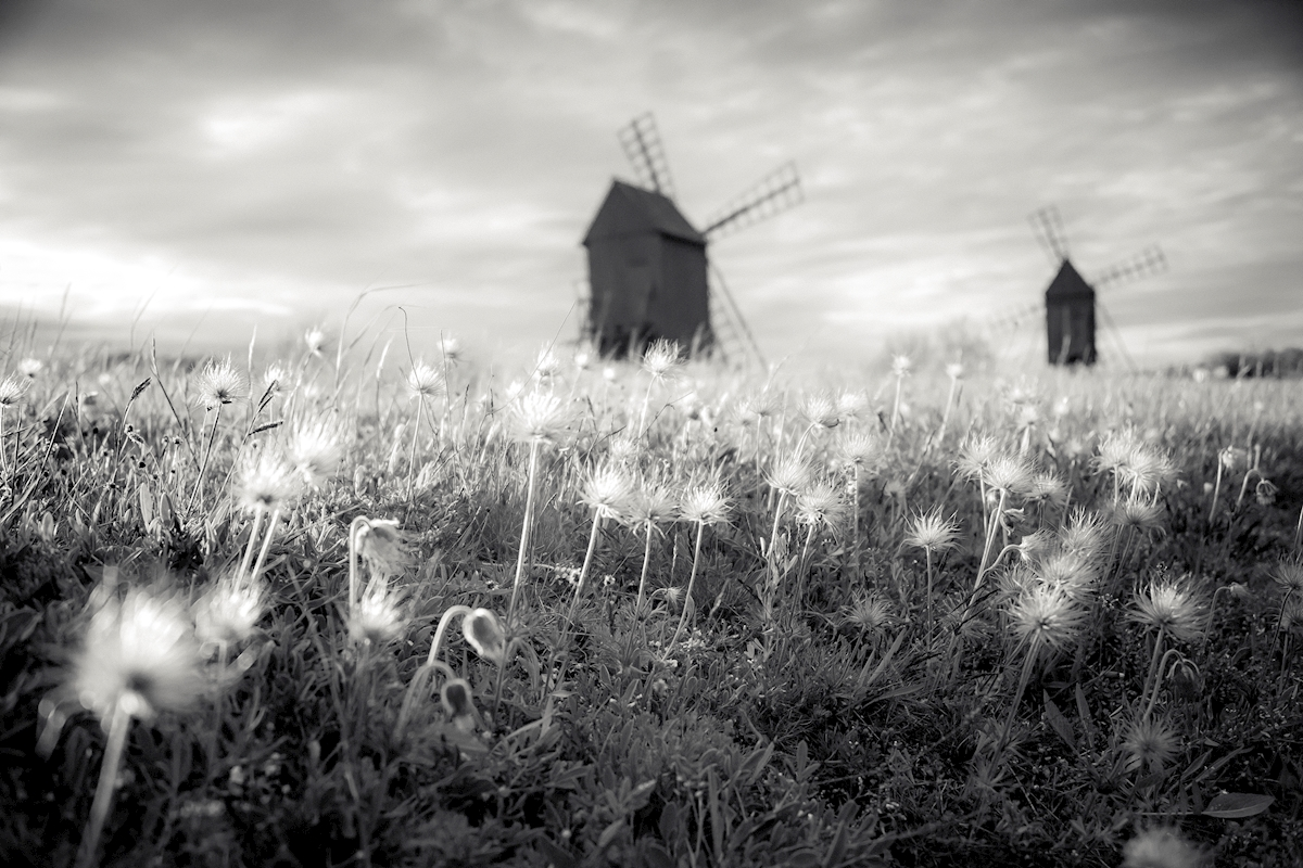 The meadows of the wind posters & prints by Christina Fryle