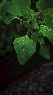 Leaf in the summer