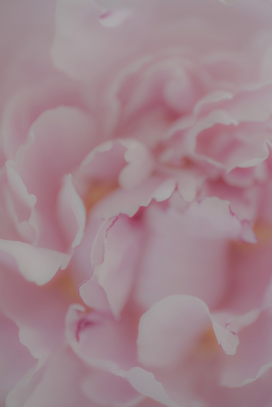 Soft pink posters & prints by Therese Blom