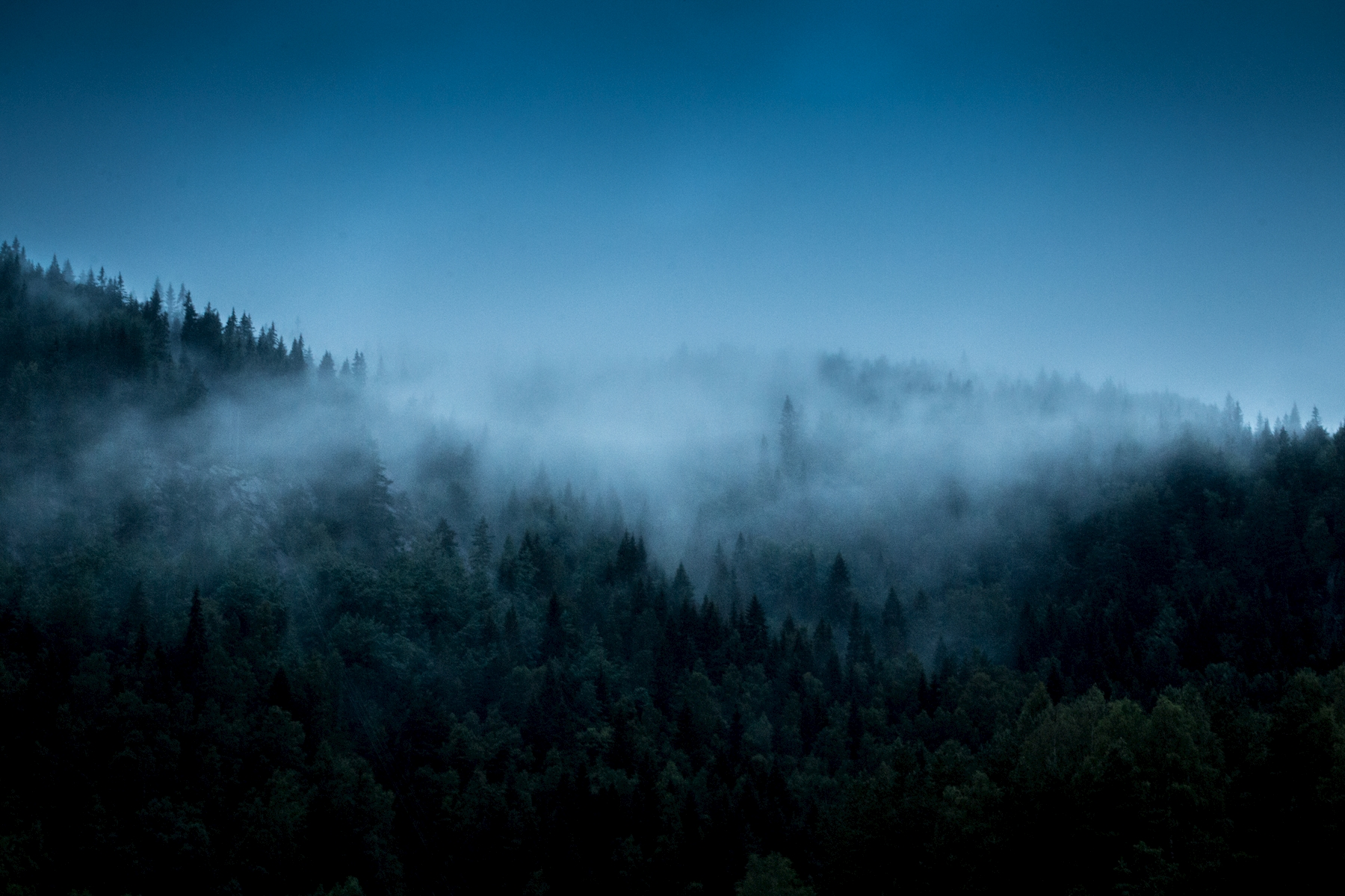 Fog over the trees posters & prints by Eric Karlsson